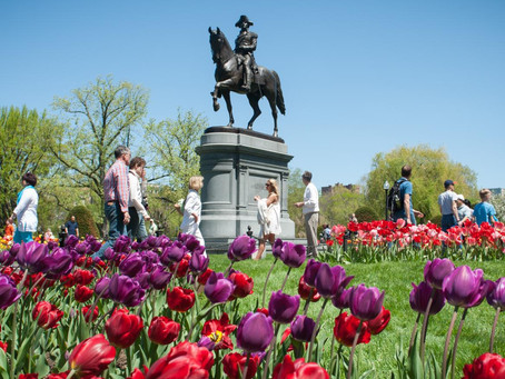 Our ultimate guide to hunkering down in Boston