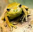 Amphibian, Frog, Reiki, Animal Reiki, Reiki For Animals, What is Reiki, Reiki Healing, Energy Medicine, Distant Healing, Complementary and Alternative Medicine