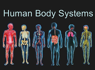 human-body-systems-1-728.jpg