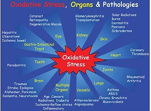 Oxidative-stress-Organs-and-Pathologies.