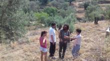Exploring the essentials of Ikaria