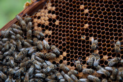 Ikaria Honey