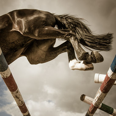 a black horse is jumping over the barrier.jpg