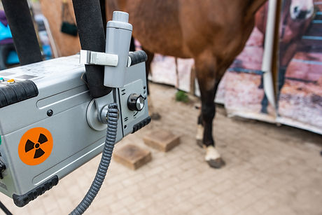 Radiographic x-ray imaging of the equine foot. The radiographic examination of the equine