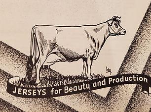 Jersey stock1.jpg