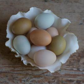 ig eggs.jpg