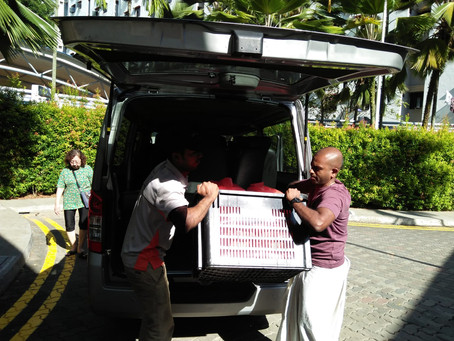 Free Food Distributions @ Marine Parade