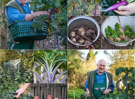 Alte Gemüsesorten im Garten Hentschel