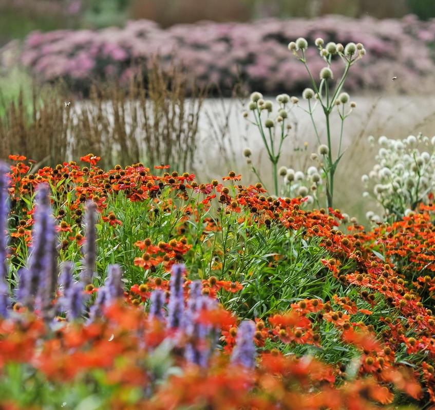 Piet Oudolf Garten in Bad Driburg