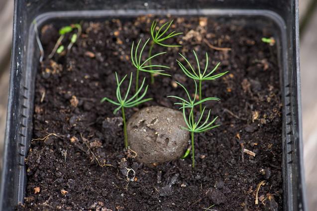 Seedball Manufaktur