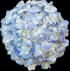 light blue premiun and regular.png