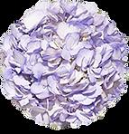 lavender premium & regular.png