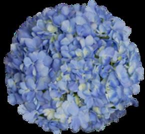 electric blue premiu and regular_edited_edited.png