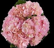 tinted rosado_adobespark.png