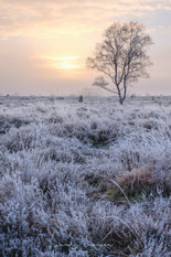 sint_anthonis_winter_2.jpg