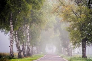 bomenrij_mist_2.jpg