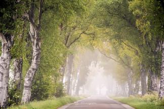 bomenlaan_mist.jpg
