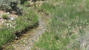 The Acequia Madre and the Park