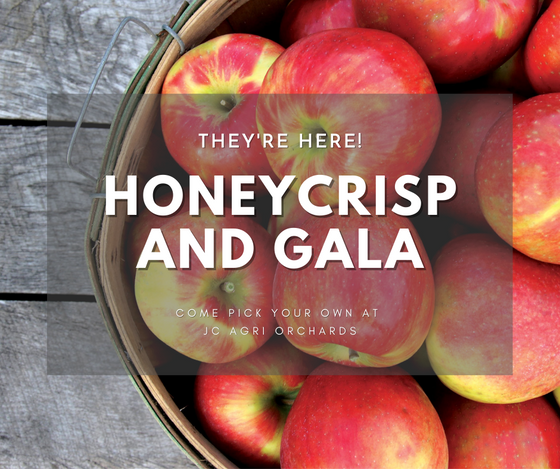 Honeycrisp and Gala apples are now ready!