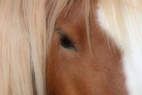 horseeye2.png