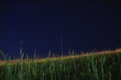 grass1