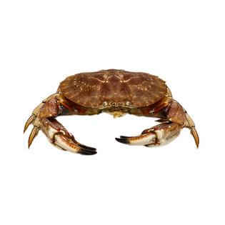 Live Stone Crab 活石头蟹