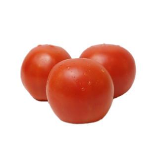 Tomato 番茄