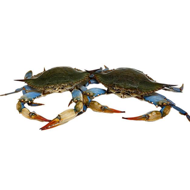 Live Maryland Blue Crab 活马里兰青蟹