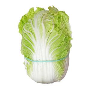NAPA CABBAGE 大白菜