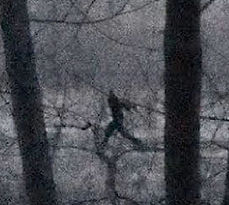 Bigfoot photo 3, northeastern PA 2018