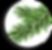 running spruce branch