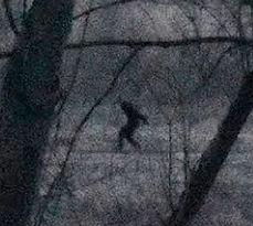 Bigfoot photo 2, northeastern PA 2018