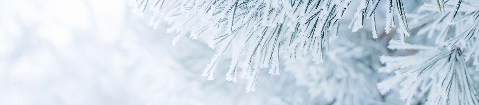 banner-snow.jpg