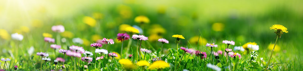 banner-spring-flowers.jpg