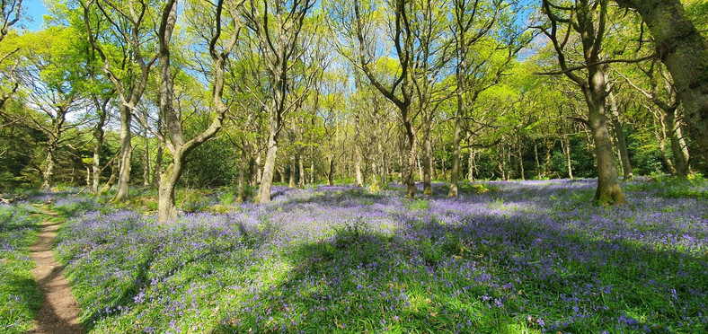 Old Spring Wood - Aka. Bluebell Woods