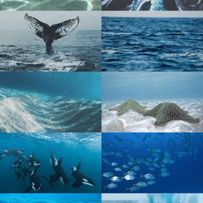 O planeta Terra é azul - azul da cor do mar