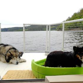 psi na lodi.jpg