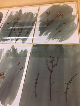exposure of plants in sunlight, preparation of the cyanotype-blue print process.