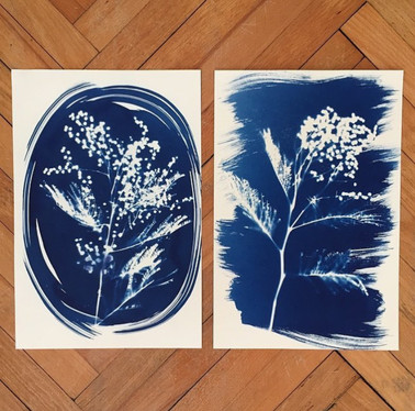 mimosas printed with cyanotype-blue print technique.
