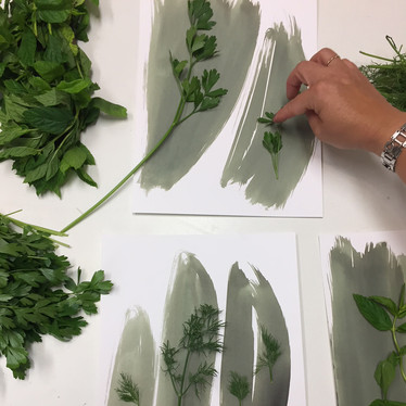 preparation of plants for the exposure, cyanotype-blue print process.