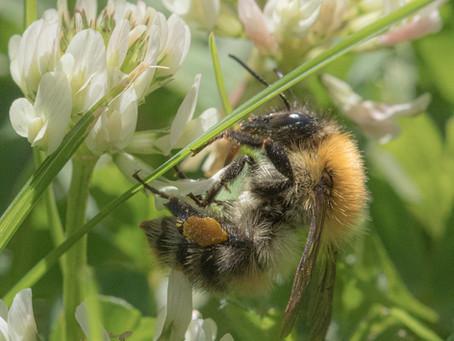 Bees & Pesticide Petition - Part 2