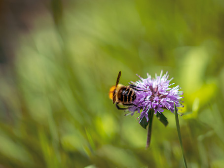 Bees and Pesticide Petitions