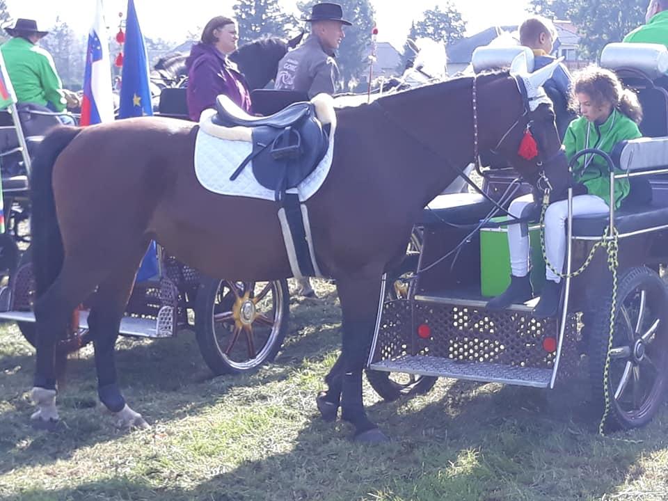 06, blagoslov konj na Barju 2020