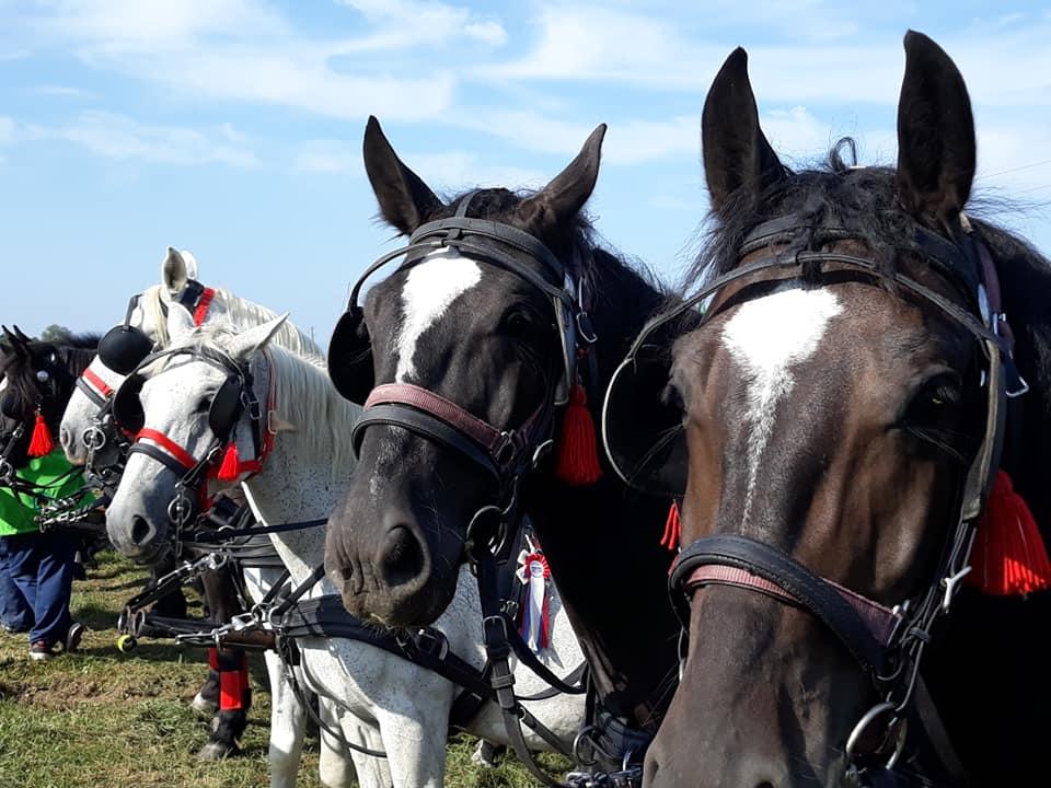 02, blagoslov konj na Barju 2020