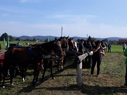 16, blagoslov konj na Barju 2020