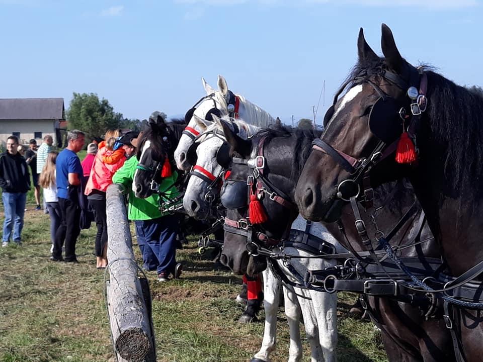 05, blagoslov konj na Barju 2020