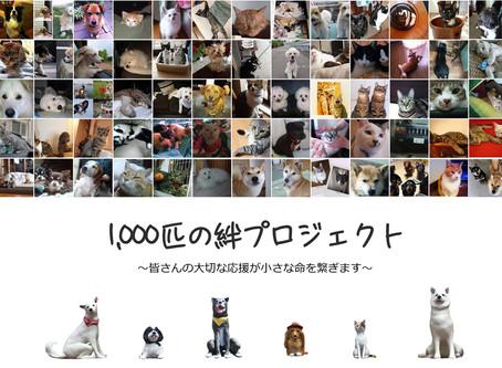 1,000匹の絆プロジェクト始動!