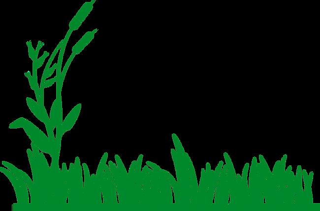 grass4.png