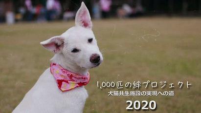 1000匹の絆プロジェクト