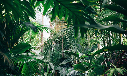 Jungle NYC. Green is Good
